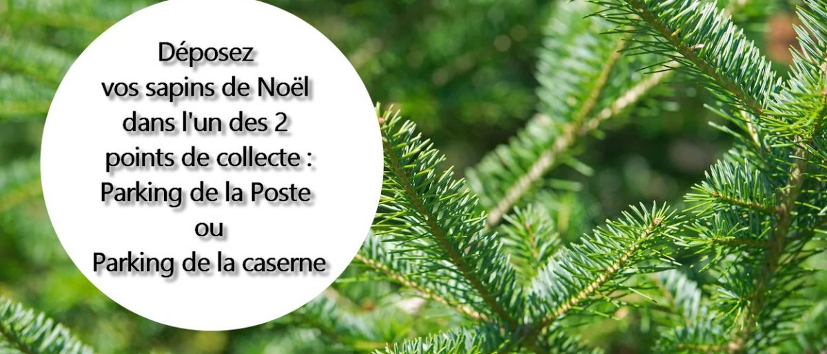 Permalink to: Collecte de sapins de Noël